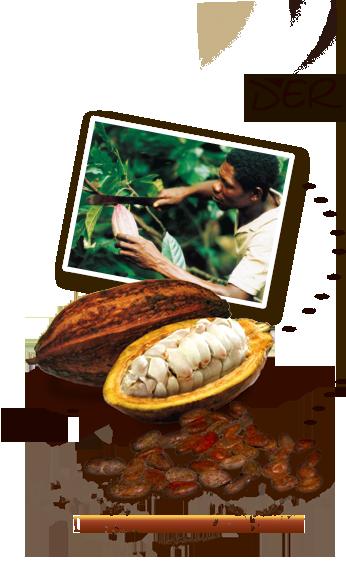 Kakaobohnen-Anbau